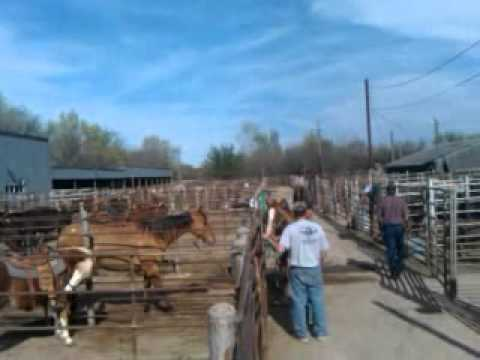 Another video of the spring horse sale in Nebraska