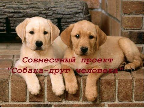 Вышивка крестом породы собак