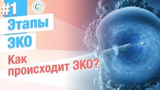 Смотреть видео Как происходит ЭКО? Этапы процедуры ЭКО и ЭКСИ онлайн