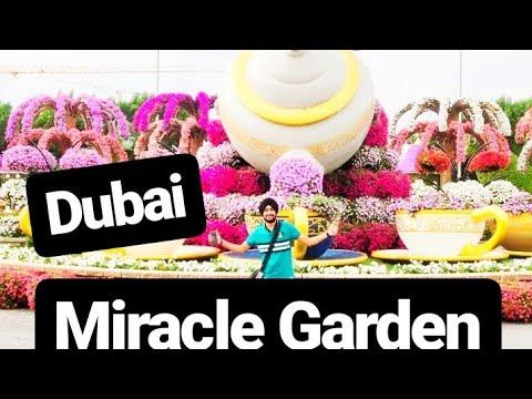 Miracle Garden in Dubai 2nd part    inside views of Miracle Garden    MV vlogs Dubai    