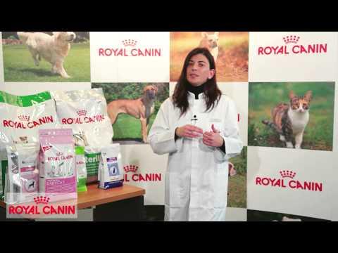 Alimentación A Medida - Nutrición Royal Canin