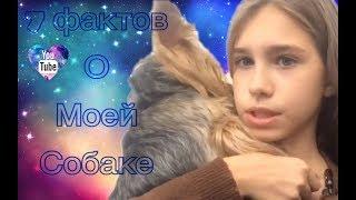 7 фактов о моей собаке(Key Ley) Моника чуть не съела хомяка!!