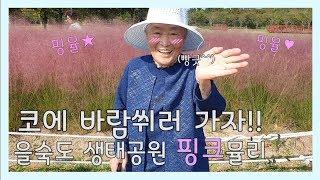 [치매어르신][더빙]코에 바람도 좀 쐬셔야죠~ 부산 을숙도 핑크뮬리!!