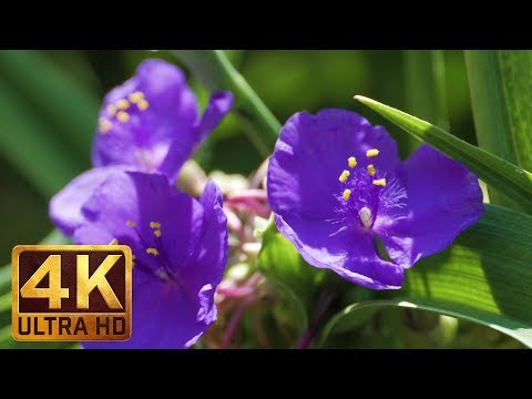 4K Flowers - Summer Wildflowers Bouquet   2 Hours Summer Relax Video