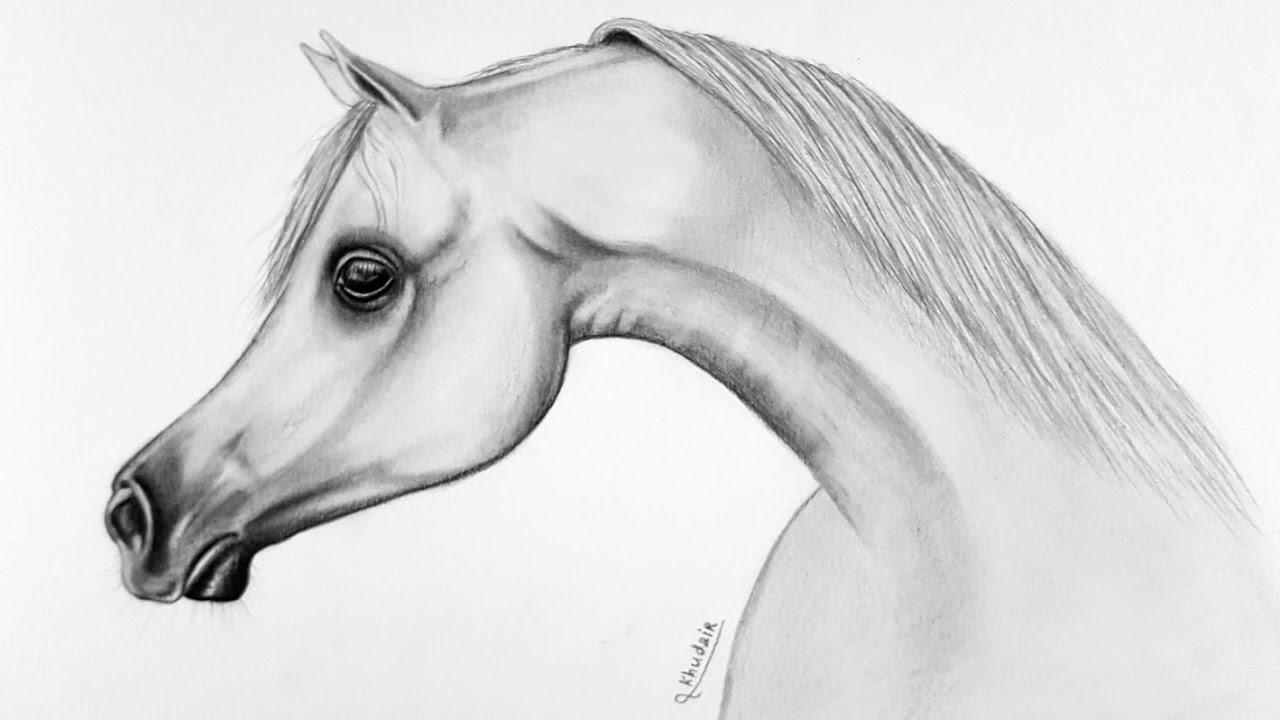 كيفية رسم حصان بأقلام الرصاص خطوة بخطوة Youtube