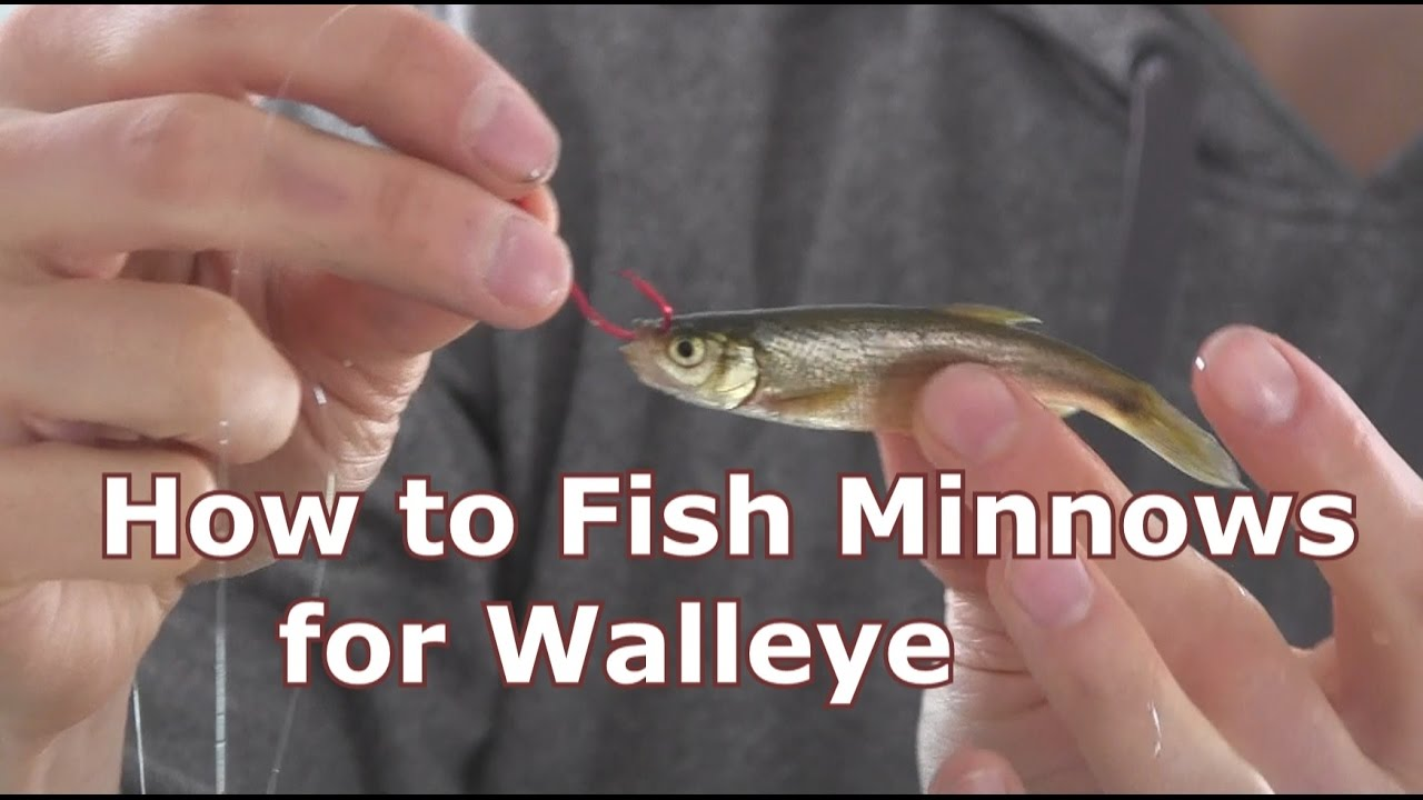 walleye fishing with minnows - how to hook and jig live bait - youtube, Hard Baits