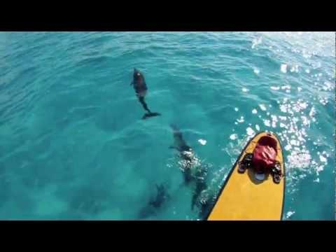 Offshore Paddleboarding with Plenty Dolphin - Bimini, Bahamas