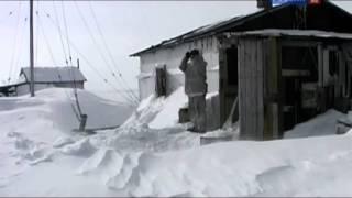 Рейтинг Баженова самые опасные животные России часть 1