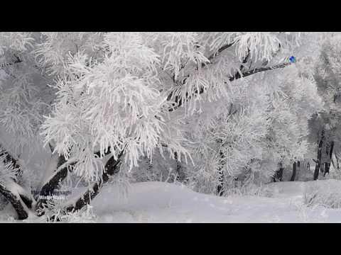 Winter Music - Martino Vergnaghi