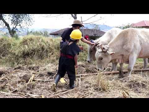 La SIEMBRA del MaiZ  en SaragurO  /ADONIS CHIKITO