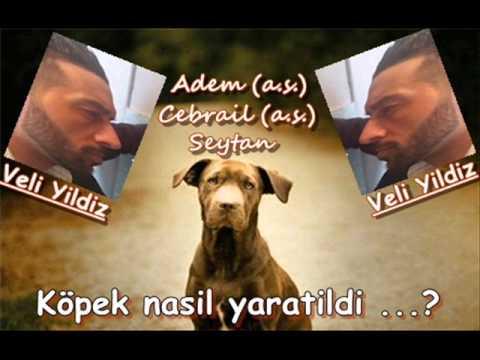 Köpek nasil yaratildi ? (islam) - Veli Yildiz