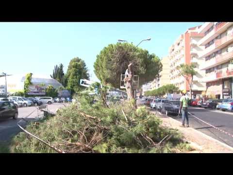Pescara. Piano per potare 800 alberi