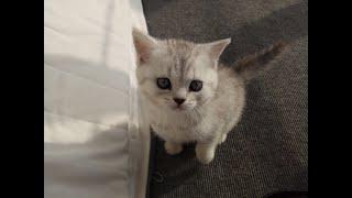 Шпиц помогает котенку найти выход