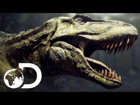 T-Rex Fights For Survival Against Vicious Enemies | Clash Of The Dinosaurs