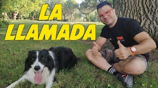 Entrenamiento de Llamada | Enseñar a tu Perro a Venir