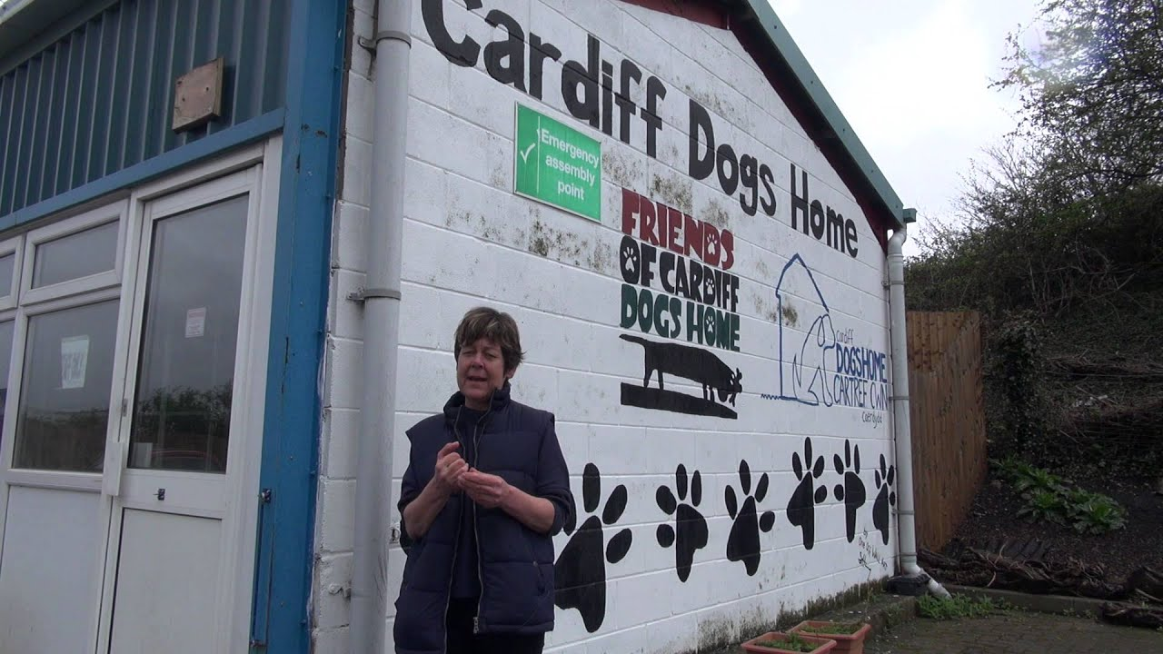 Friends For Dogs Cardiff