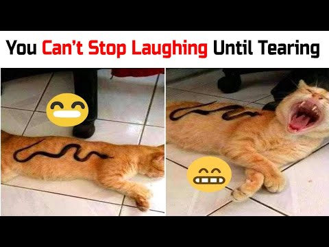 Funny Cat Videos 2020 : Funny Cats Compilation Try Not Not To Laugh 😂  || Daily Dose of Internet