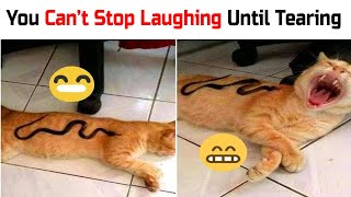 Funny Cat Videos 😻 Try Not To Laugh Or Grin 😺 Challenge ❗