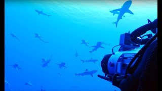 Filming Sharks In Protected French Polynesian Waters - Blue Planet II Behind The Scenes
