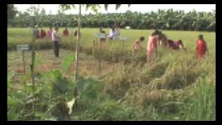 The Rice Growers of Nepal