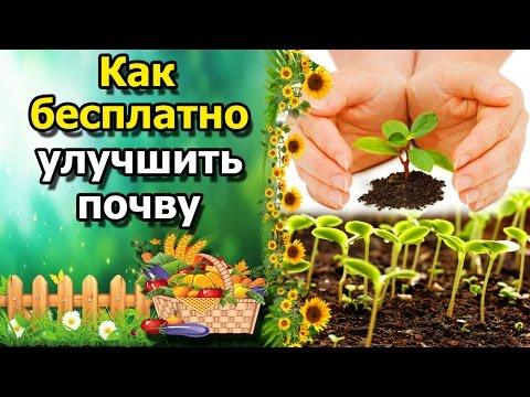 ☘Как  бесплатно улучшить(обогатить) почву. Доступное органическое удобрение для огорода.