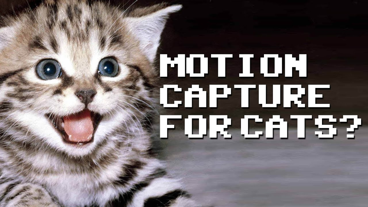 Motion Capture for Cats