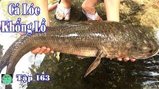 đi xem cá lóc khổng lồ chuyện lạ có thật miền tây   cá khủng   big fish   NGÃ NĂM TV Tập 163