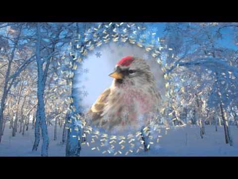 Экологический проект Зимующие птицы