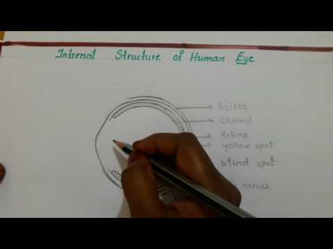 Human eye diagram youtube human eye diagram ccuart Choice Image