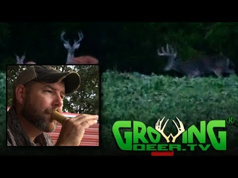 Deer Hunting Prep:  Scouting Bucks, Grunt Calling and More (#404) @GrowingDeer.tv