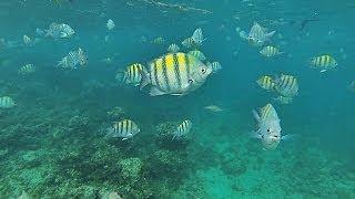 Snorkeling - Punta Cana (GoPro)