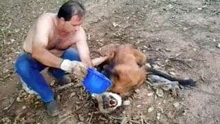 When This Man Found A Dangerous Animal Near Death, He Chose To Take His Life In His Own Hands