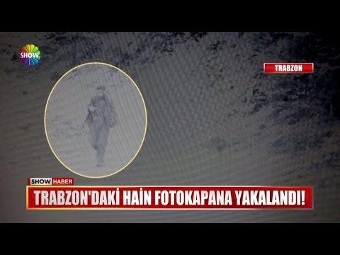 Trabzon'daki hain fotokapana yakalandı!