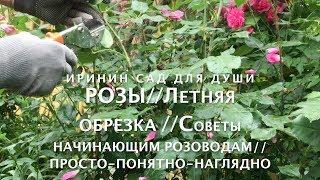 РОЗЫ//Летняя  обрезка//Советы начинающим розоводам//Просто-понятно-доступно