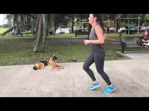 Rory | German Shepherd | Training With Distractions