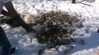 Elle balık böyle tutulur