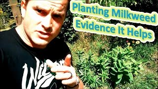 Planting Milkweed - Evidence It Helps (How To Help The Monarch Butterfly)