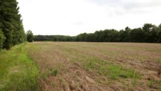 Land for Sale in South Carolina (near Charleston, SC)