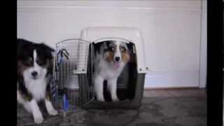 Crate Training A Puppy - Dog Tricks #2