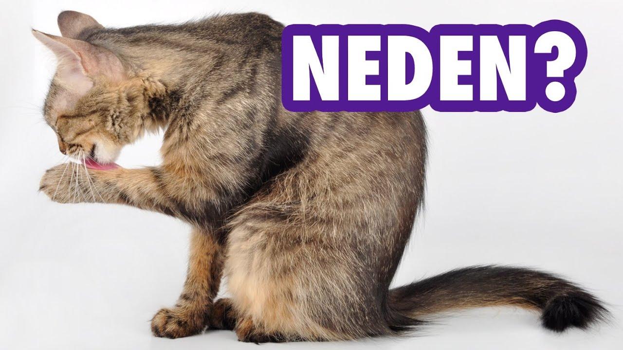 Kediler İnsanı Neden Yalar