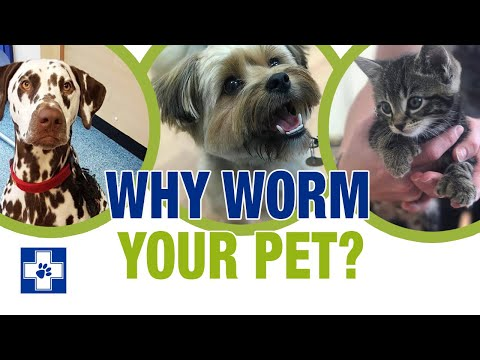 Why Should I Worm My Cat Or Dog?