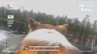 Бордер-колли Варди - первый пёс-водник турклуба Скиталец