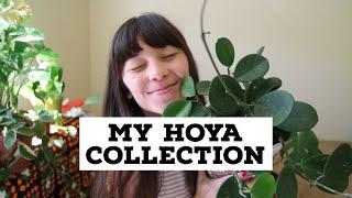MY HOYA COLLECTION! | & Hoya Care Tips