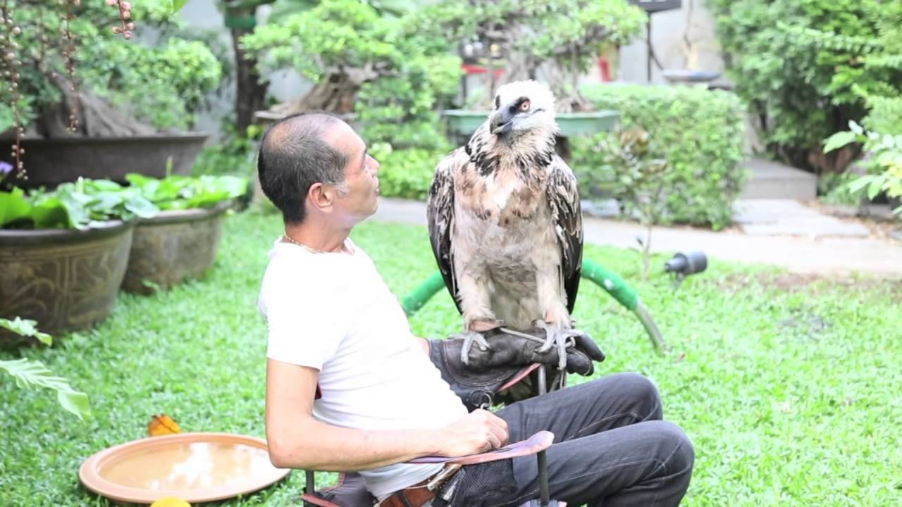 Bearded Vulture 1st Day Youtube