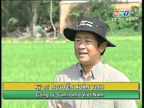 Kỹ thuật phòng trừ rầy nâu hại lúa Đông - Xuân