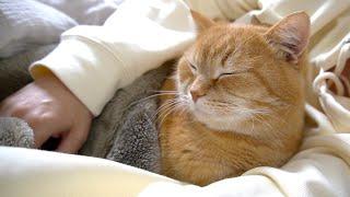飼い主の鼻息が気になって眠れない猫