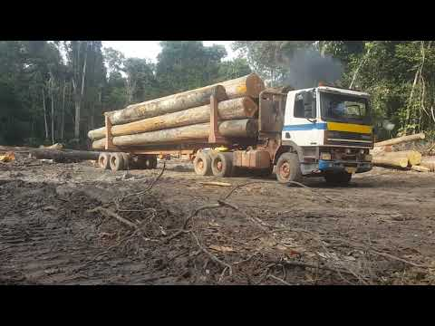 Suriname Logging ( Timberwolves Consultancy)Paul Lim