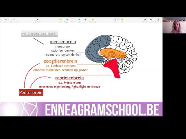 Welk deel van je brein zet jij in?