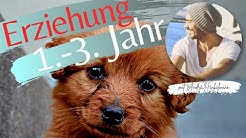 Zeitfenster für die Hundeerziehung von der 8. Lebenswoche bis zum 3. Lebensjahr!