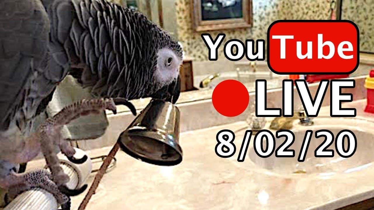 🔴🐦Einstein Parrot LIVE! 8/2/20
